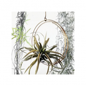 Airplant display ring small | Nancy Design