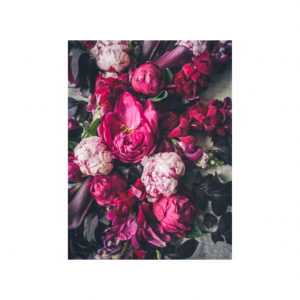 Pink Peony Scatter Cusion   Nancy Design