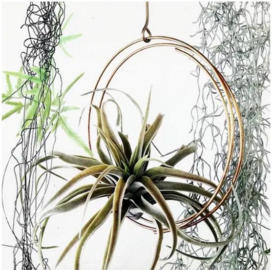 Plant Decor by Nancy Interior Design